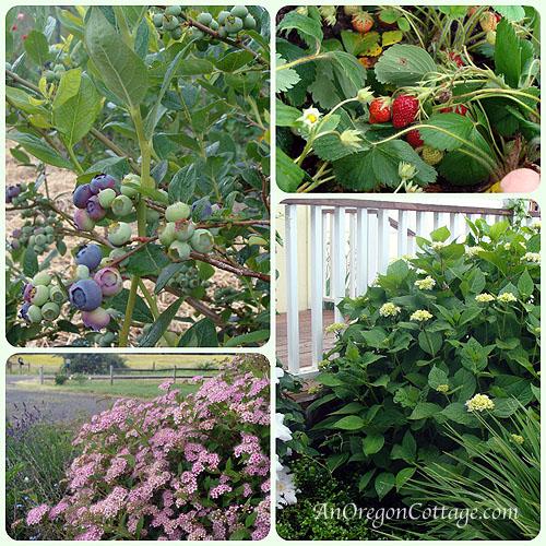 Fruit-Flower Collage.6-12_blog