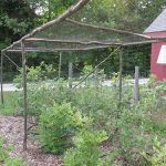 Rustic blueberry cage