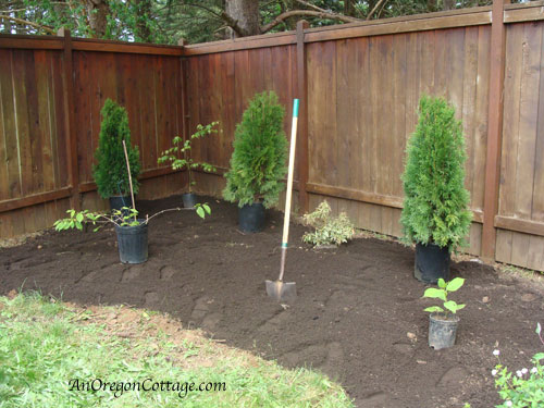 8 Steps to a New Shrub and Flower Bed - Setting Plants | An Oregon Cottage
