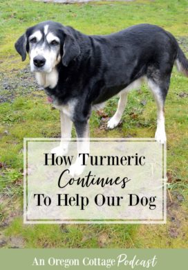 Podcast Ep. 27: How Turmeric Continues To Help Our Dog