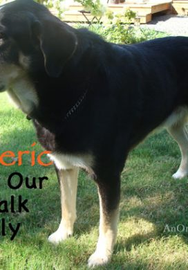 How Turmeric Helped Our Dog's Hip