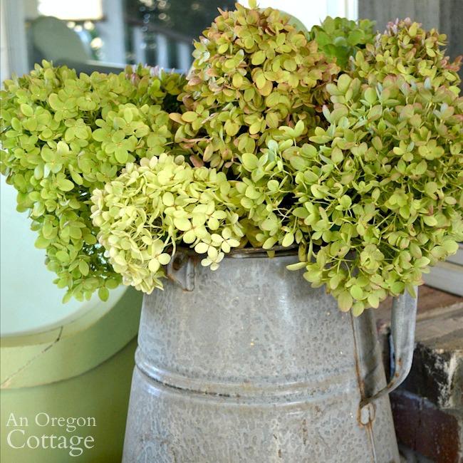 Little Fall Lime Hydrangeas in vintage coffee pot