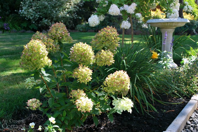 Hydrangea Gardens Oregon Garden Ftempo
