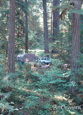 Vintage Trailer Camping