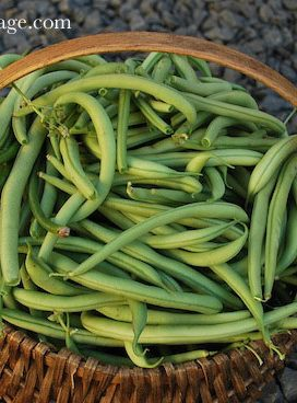 Green Bean, Tomato and Pepper Recipes