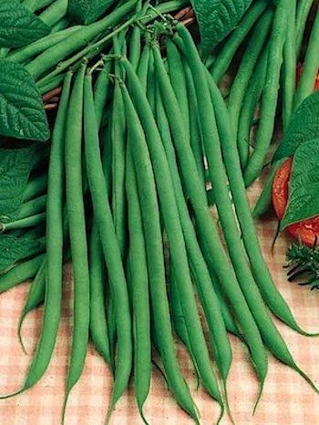 beans_pole_fortex