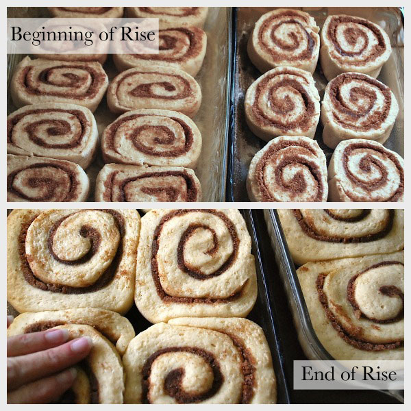 Best cinnamon rolls - rising dough