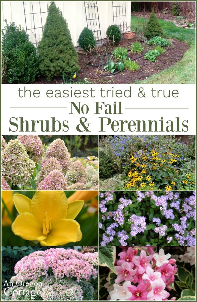 Easiest tried-true no fail shrubs and perennials
