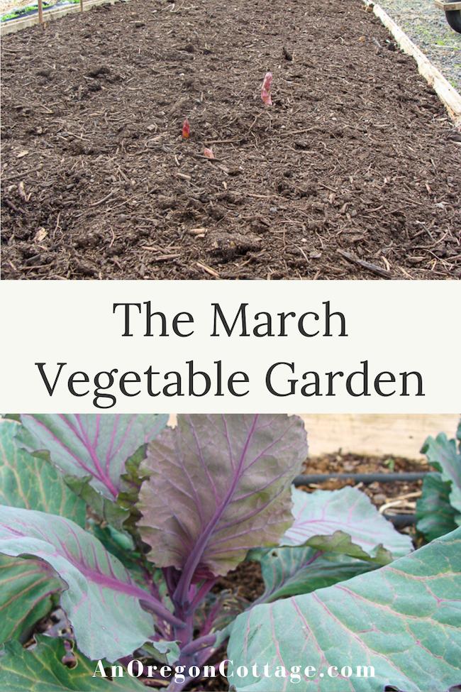 March vegetable garden