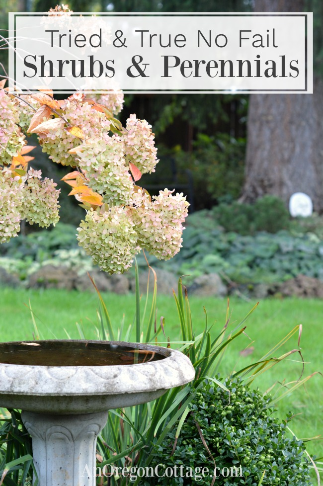 Tried And True Easy Care Shrubs Perennials An Oregon Cottage