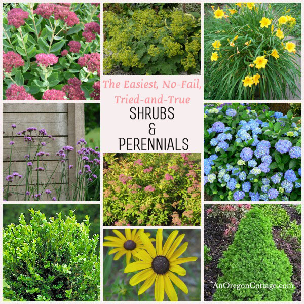 The easiest, no-fail, tried-and-true shrubs and perennials for your garden- all are easy to find and inexpensive!
