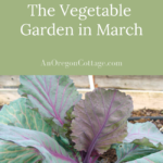 growing vegetable garden in March