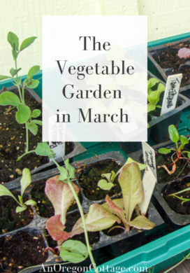 the vegetable garden in March