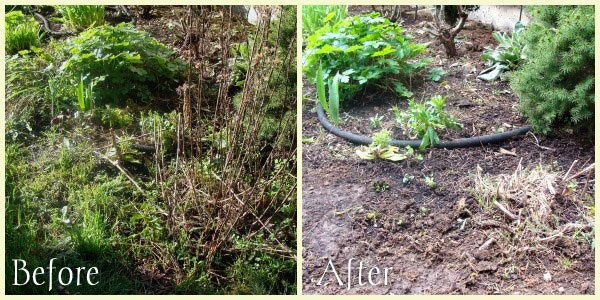 yarrow-before-after
