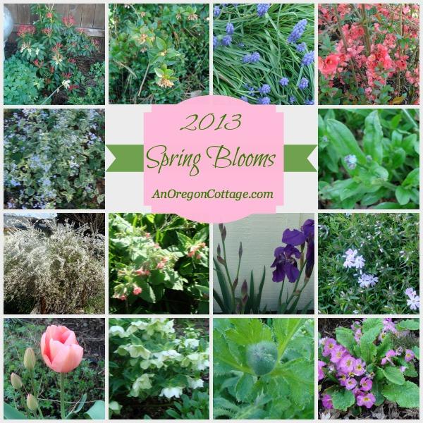 2013 Spring Blooms