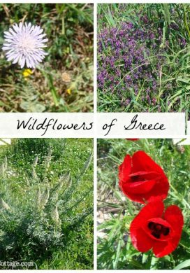 Greek Wildflowers-known