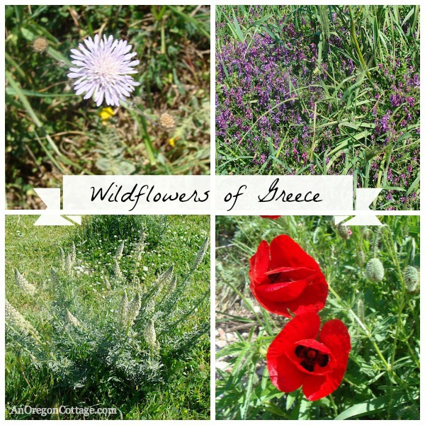 Greek Wildflowers-known