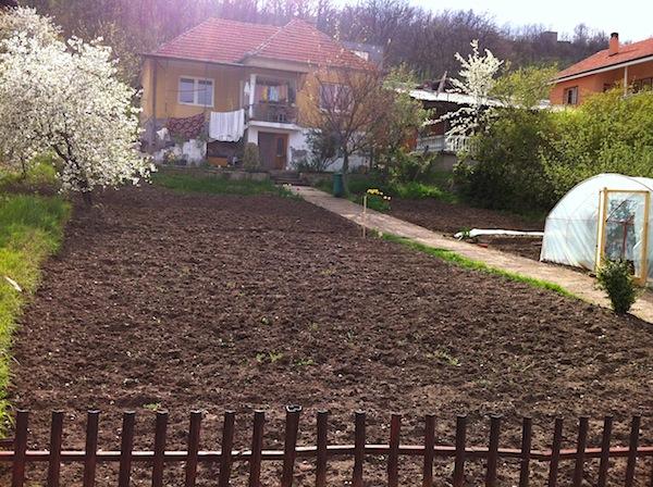 kamencia front yard:garden