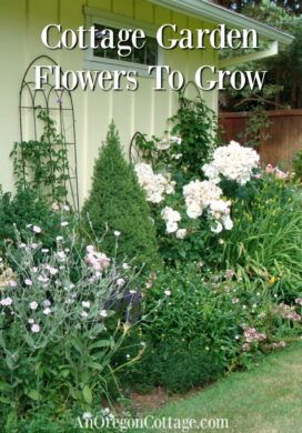 11 cottage garden flowers to grow
