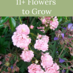 cottage garden flowers to grow