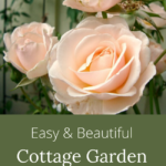 easy-beautiful cottage garden flowers