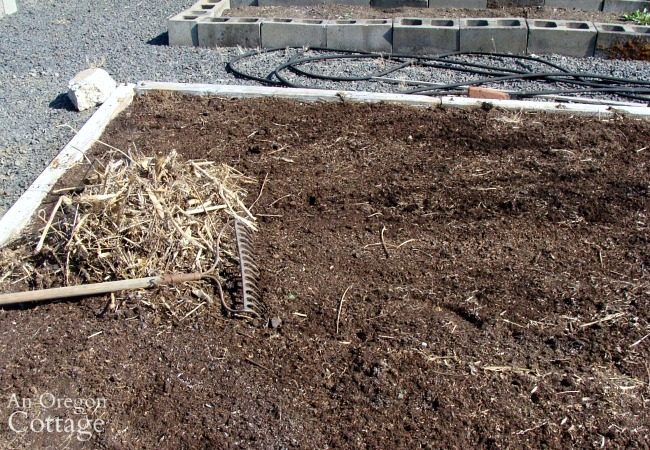 raking dead weeds from corn bed