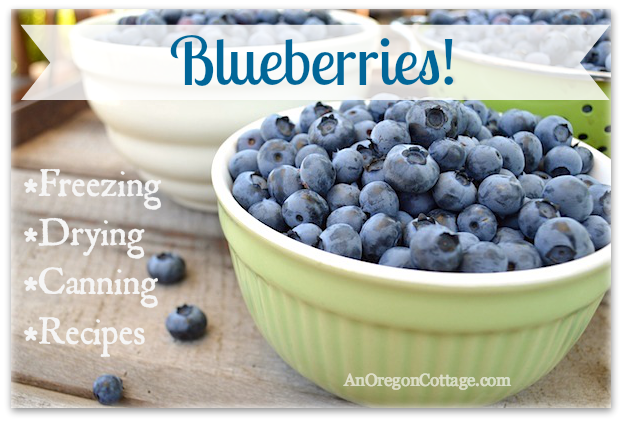 Blueberry Guide-recipes to preserve and cook with fresh blueberries