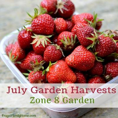 July Garden Harvests at Frugal Family Home