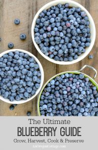 The Ultimate Blueberry Guide for growing and harvesting with cooking and preserving recipes
