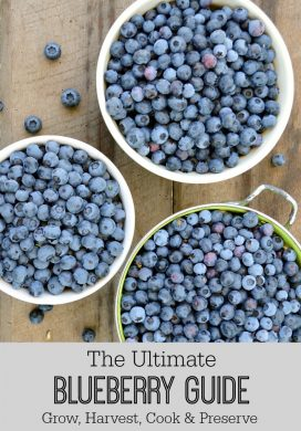 Ultimate Blueberry Guide: Growing, Freezing, Drying, Canning & Fresh Recipes
