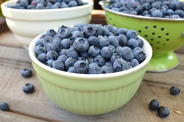 blueberry harvest 7-13
