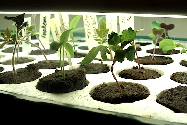 dog-mess-seedlings