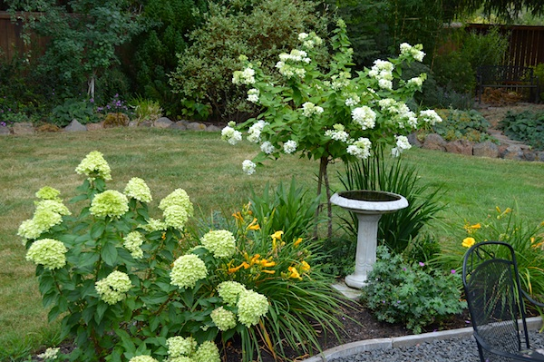 August Blooms-PG & Little Lime Hydrangeas