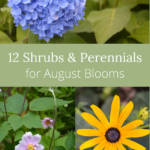 shrubs and perennials for august flowers