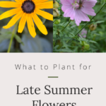 what to plant for late summer flowers