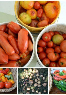 9-9-13 Garden Harvest