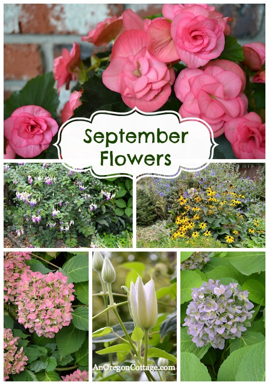 September Flowers :: An Oregon Cottage