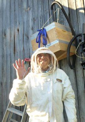 Bee Update: Harvesting Wild Bees {TGP}
