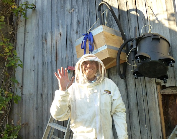 Bee Man Harvesting Wild Bees::An Oregon Cottage