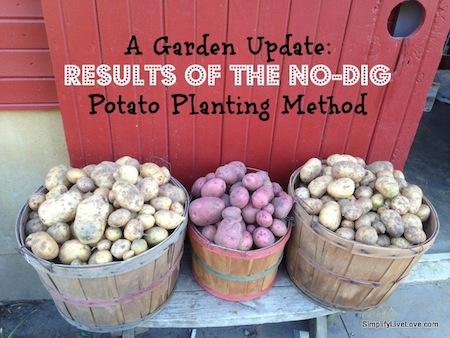 No-dig-Potato-Planting-Method