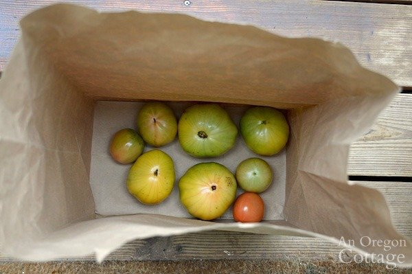 tomatoes in bottom of paper bag