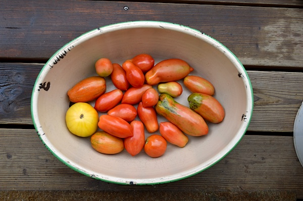 Ripening Tomatoes in Enamel Bowl