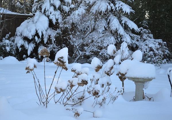 12-13 Snow Day 2- Bird Bath - An Oregon Cottage