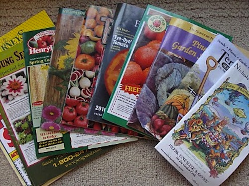 Seed Starting Basics An Oregon Cottage