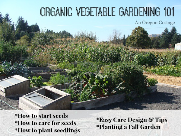 how to plant a garden-Organic Vegetable Gardening 101 - An Oregon Cottage