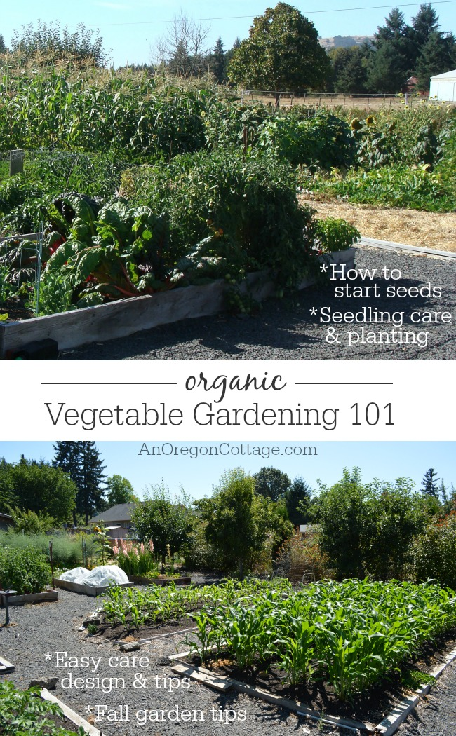 Learn the basics of easy care organic vegetable gardening from starting seeds to fall planting tips.