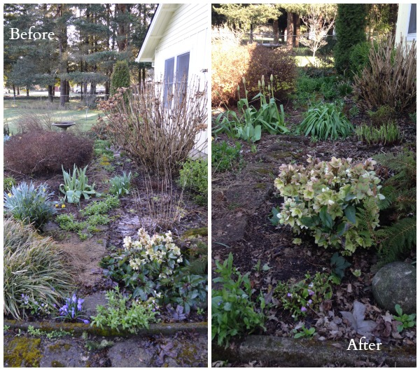 Front Garden Beds Before and After - An Oregon Cottage