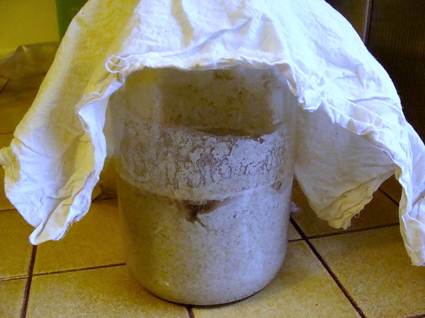 How to Grow Sourdough Starter Day 2 - An Oregon Cottage