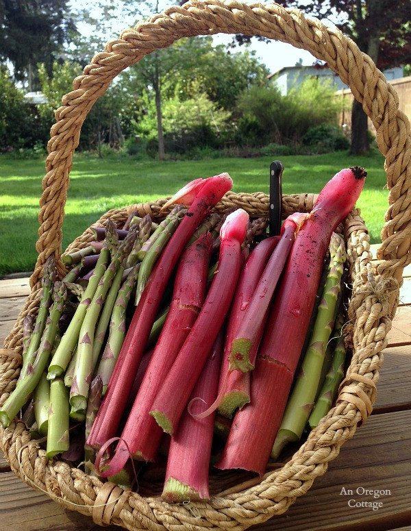 Spring Rhubarb and Asparagus Harvest - An Oregon Cottage