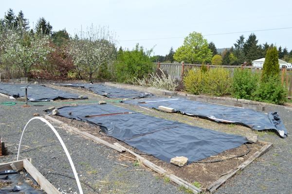 plastic-covered large vegetable beds.04.14 - An Oregon Cottage